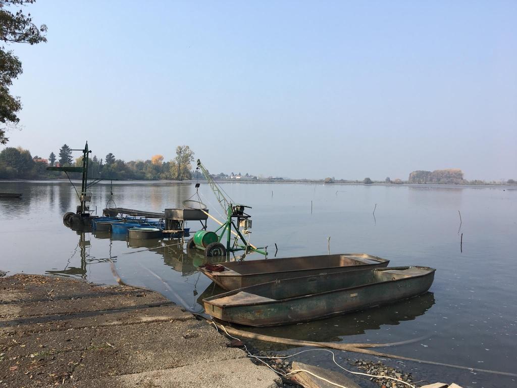 Slavnostní výlov Hradeckého rybníka 2019 - rybářství Tovačov