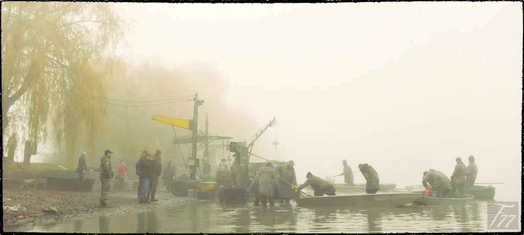 Výlov rybníka Bezruč 2019