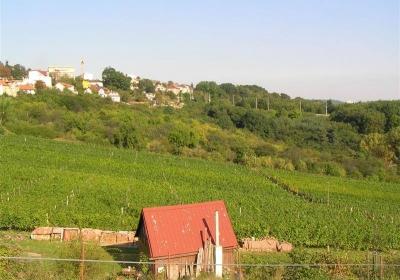 20. ročník Vysočanské vinobraní na vinici Máchalka 2019
